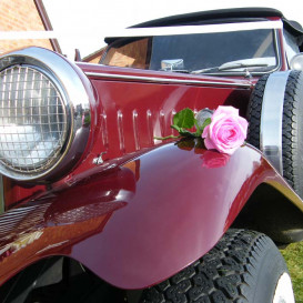 beauford-30-rose